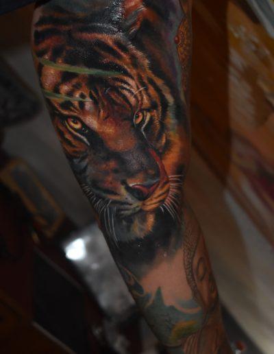 tigrissss